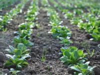 Bioland-Gemüsebauer Hankel: Vortrag am 5. März